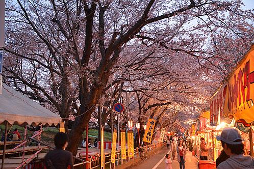 熊谷桜堤①