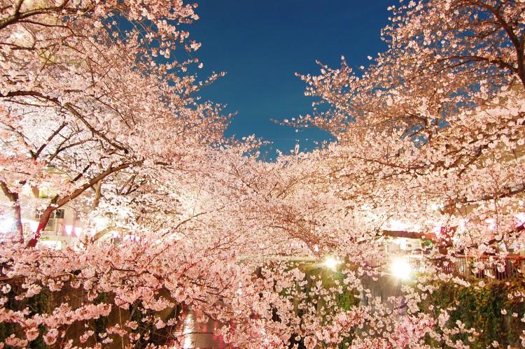関東でライトアップした夜桜を見に車でドライブ!おすすめは群馬!