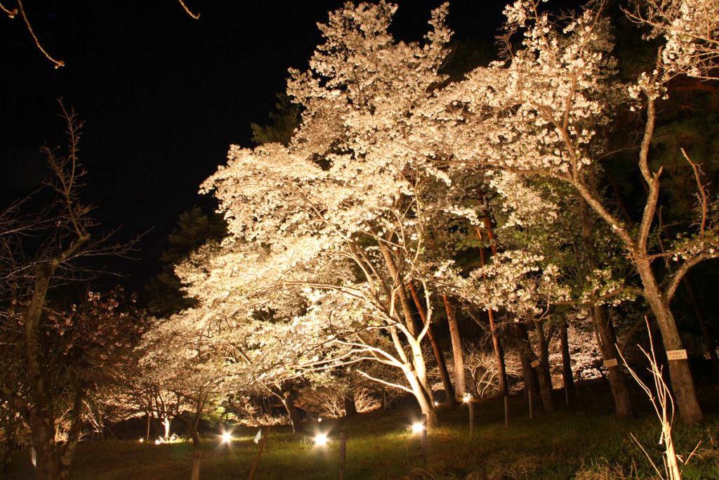 長瀞の桜②