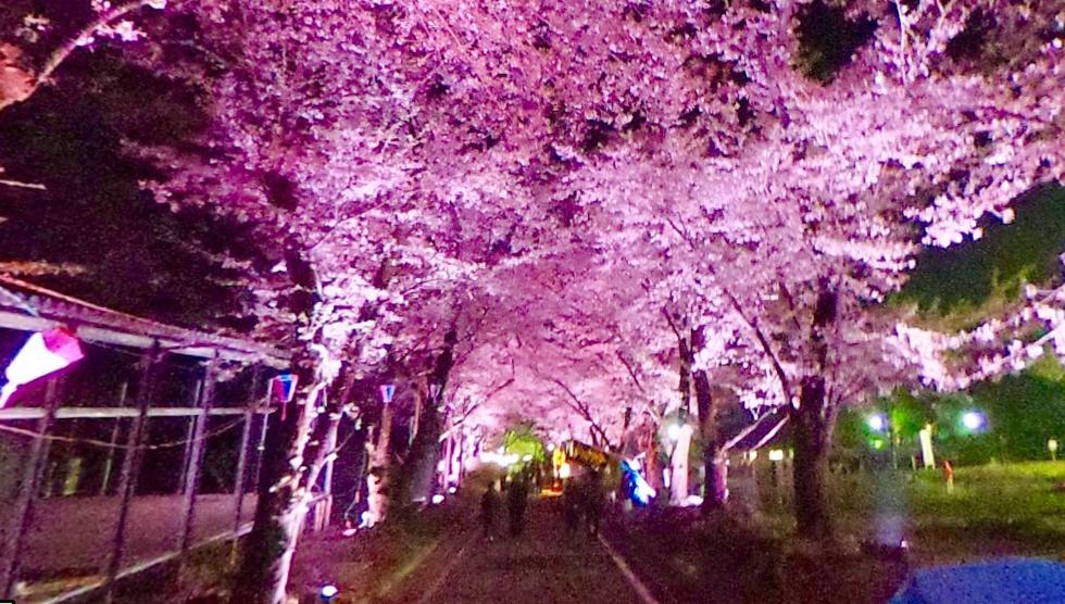 赤城 夜桜